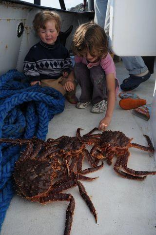 Leonie_Agathe_king_crab
