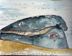 Carcasse de baleine