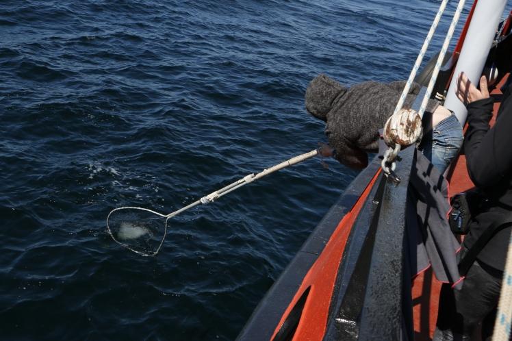 11- Anthony pêche du iceberg